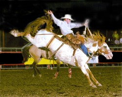 Saddle bronc ride